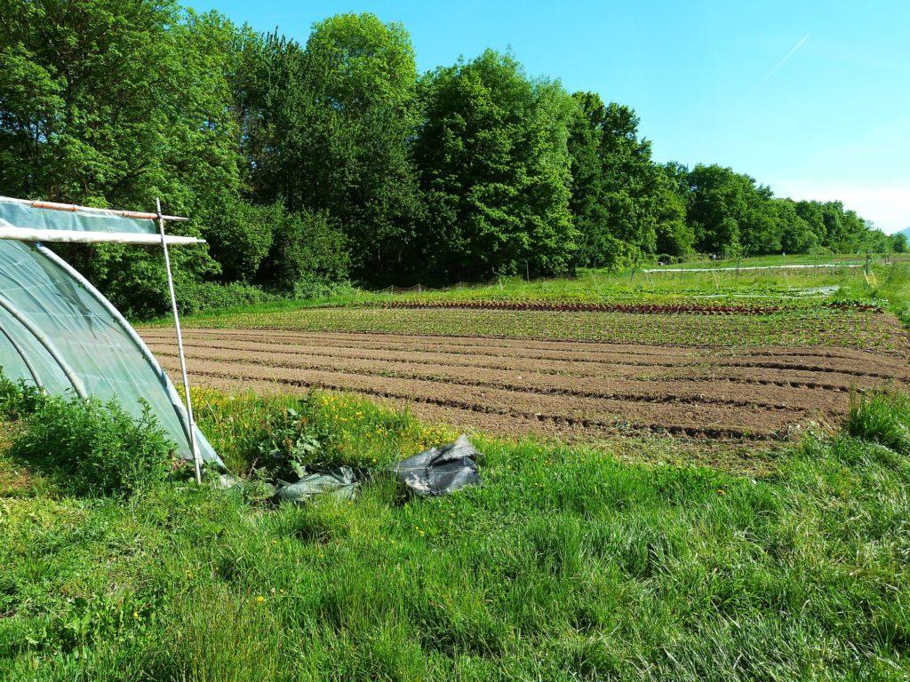 Le petit chaperon vert blog de l 39 amap de cran gevrier for Le jardin aux epilobes